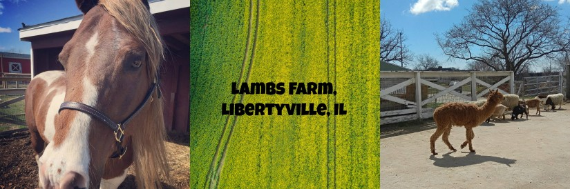Petting zoo with a difference:  Lambs Farm Libertyville